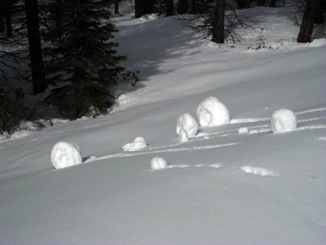47 snow snails.jpg