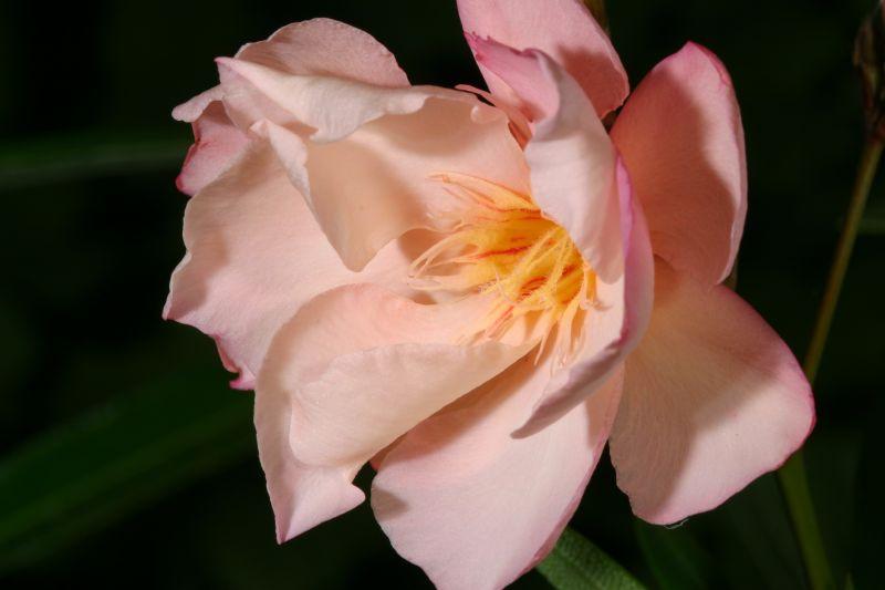 Flor_de_jardín.jpg
