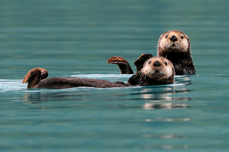 Prawns and Sea Otters
