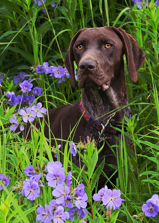 One Year for Our GSP, Grace