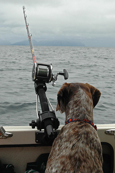 Maggie the Fishing Bird Dog