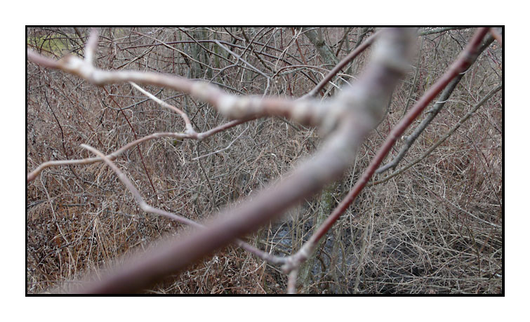 061130 Mendon Ponds series continued