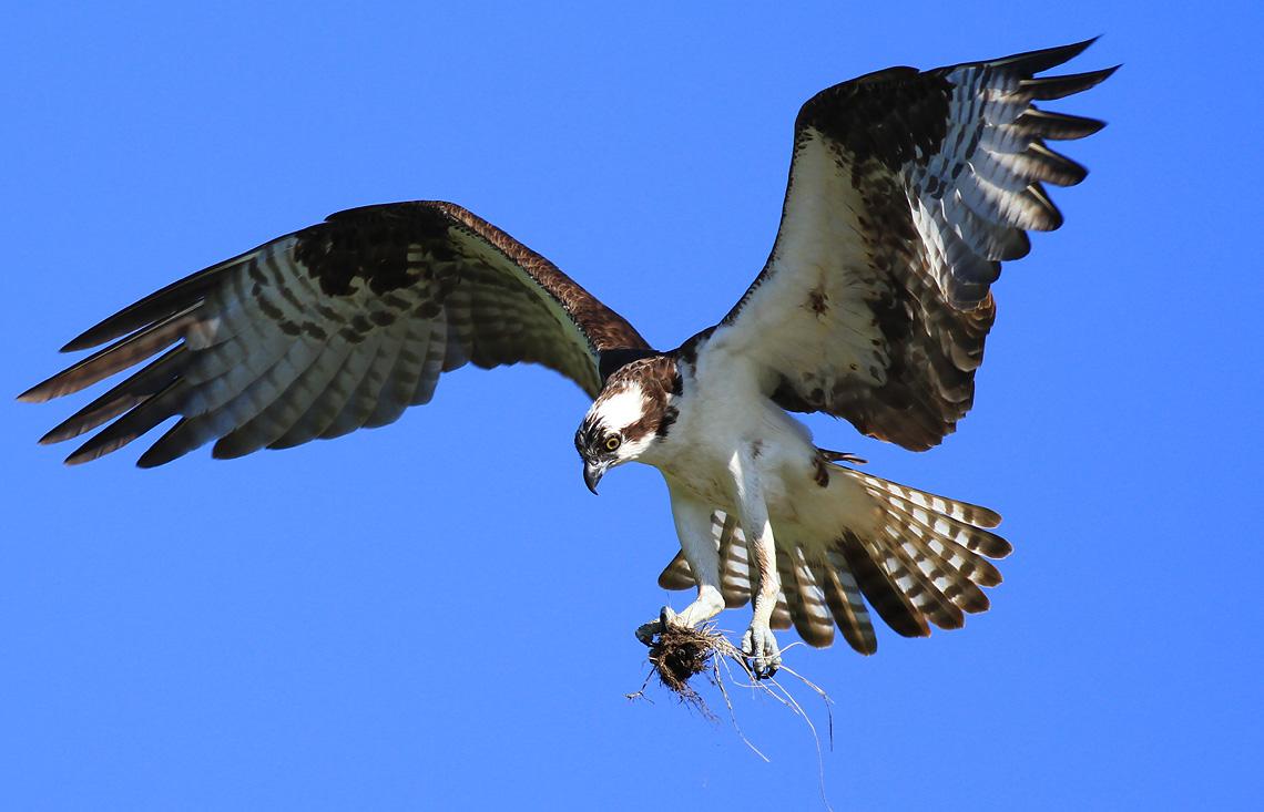 IMAGE: http://www.pbase.com/image/126679047/original.jpg