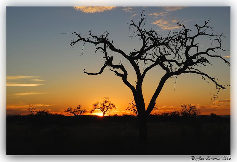 Kalahari May 2008.jpg