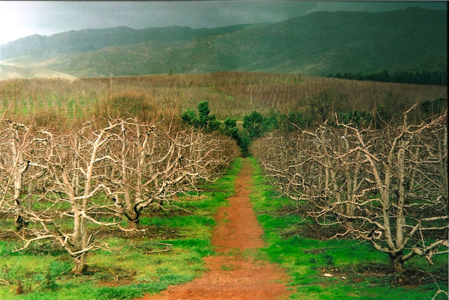Grabouw Fruit Trees shot with Leica