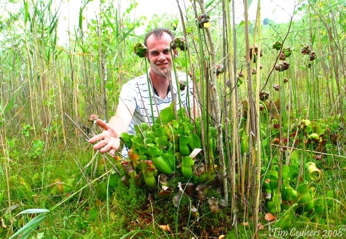 Sarracenia purpurea ssp purpurea + photographer