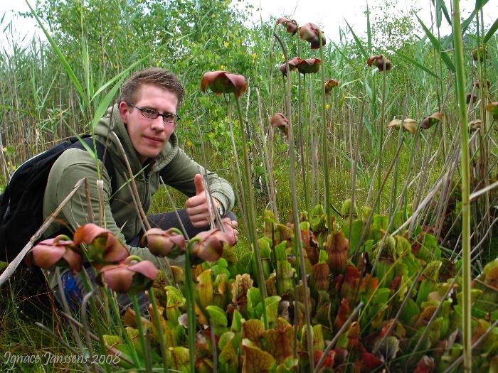 Tim with Sarracenia purpurea ssp purpurea