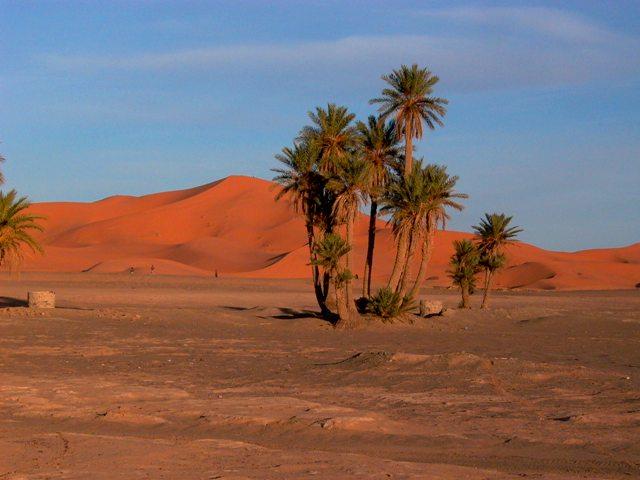 Palmeres in the desert - Palemeras en el desierto - Palmeres al desert