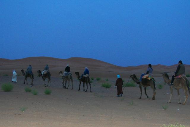 Birding Camel ride in the Sahara