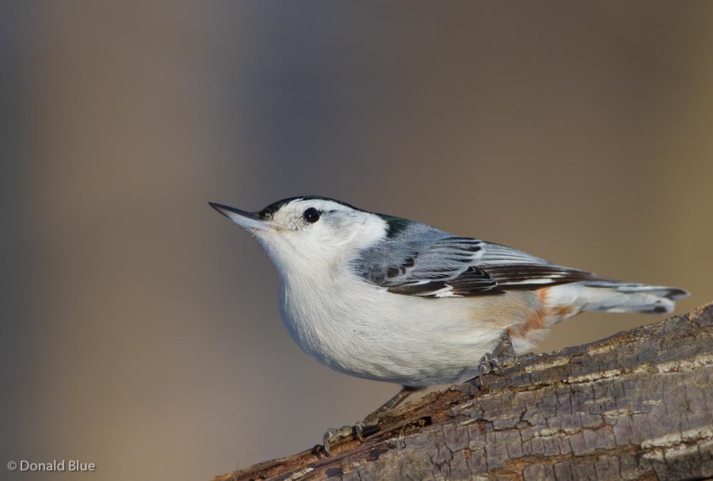Small backyard birds.... -- Birds in photography-on-the ...