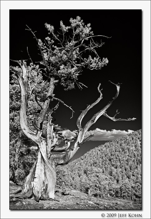 Discovery Trail #2, Schulman Grove
