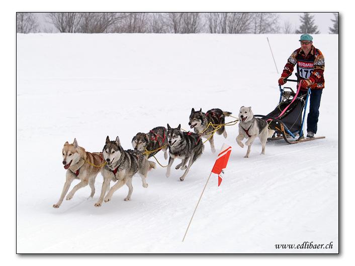Dog sledding / Schlittenhunderennen