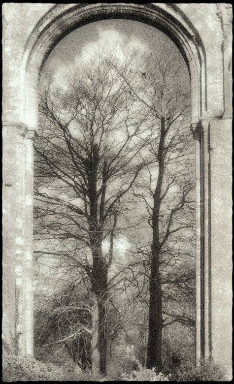 2 trees overarched
