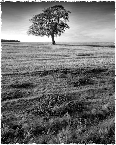 November, Kingscote