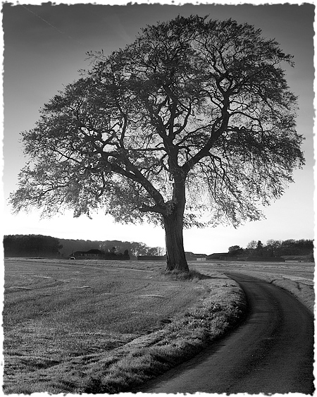 A46 tree