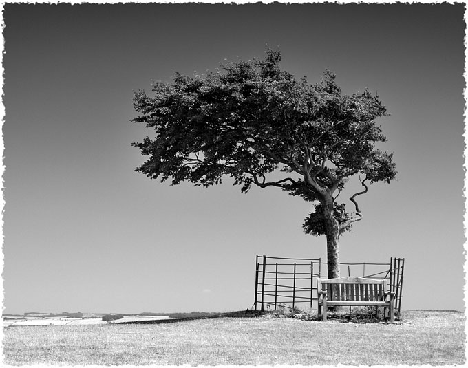 Prophetic Tree, Cleeve Hill