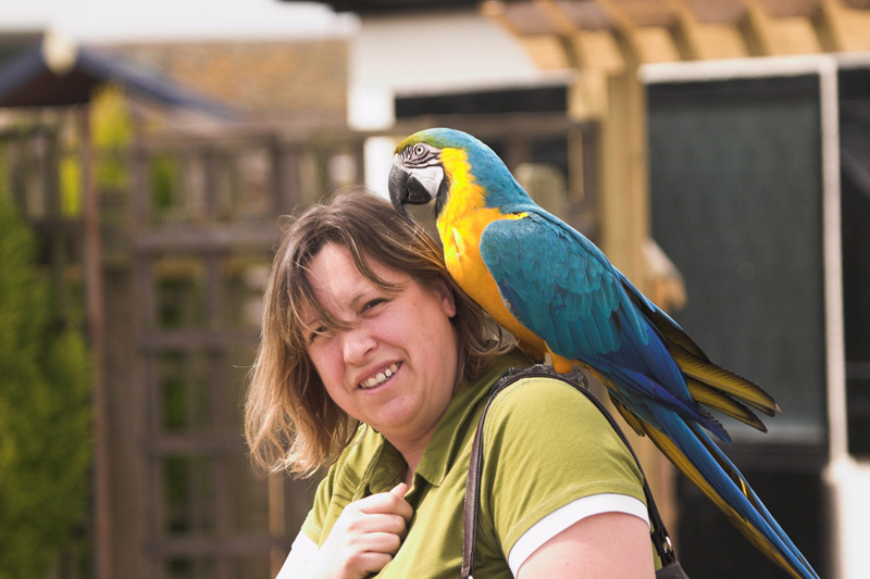 Is that a parrot on your shoulder?