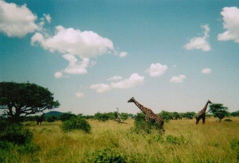 Julie in East Africa wildlife