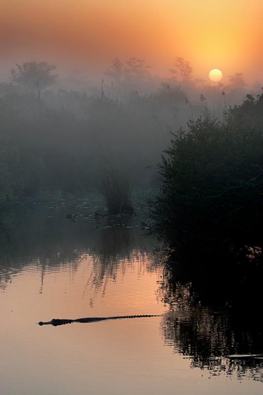 Anhinga Trail sunrise, Everglades National Park