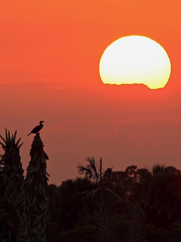 Sunset and Cormorant (Viera Wetlands)