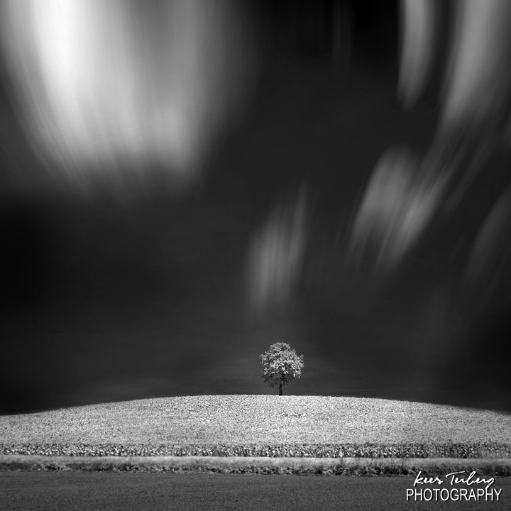 lonetree with clouds