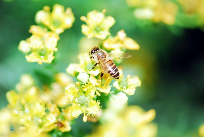 flower-119.jpg