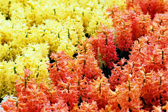 flower-140.jpg