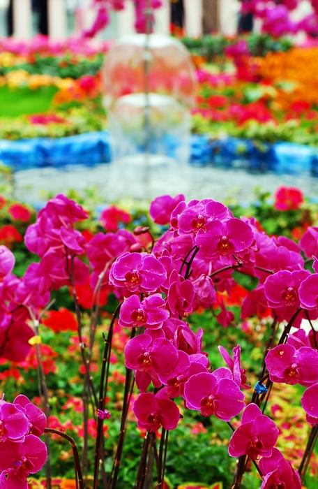 flower-160.jpg