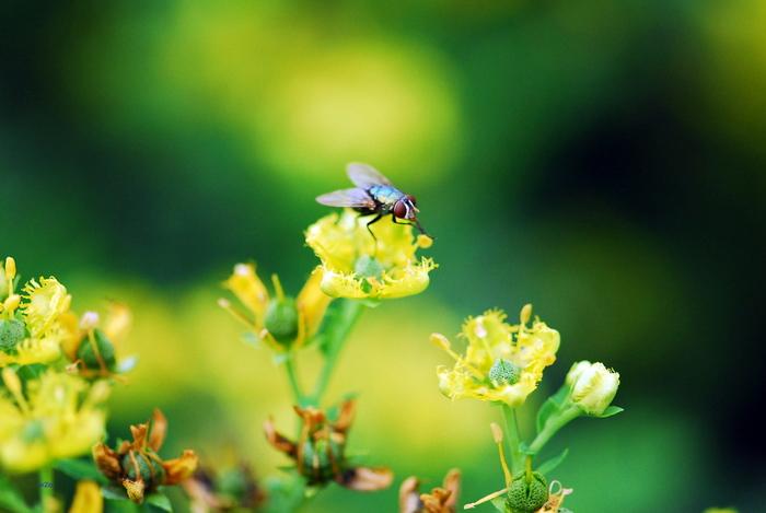 flower-72.jpg