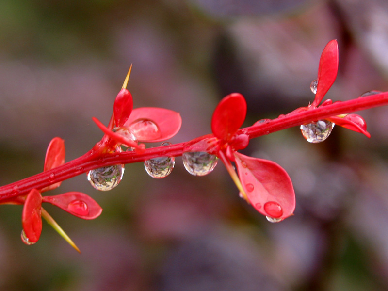 Row of hanging drops