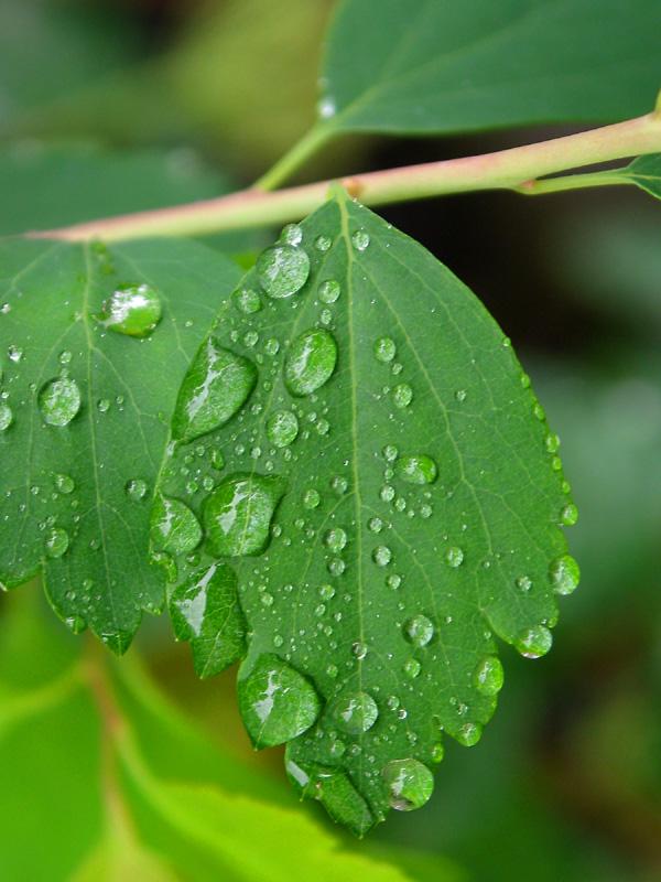 Washed leaf