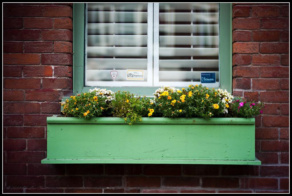 lens bubbles window sill planter