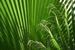 Henri LIMOUSIN IMG_4739 Callig Veget Vignette.jpg