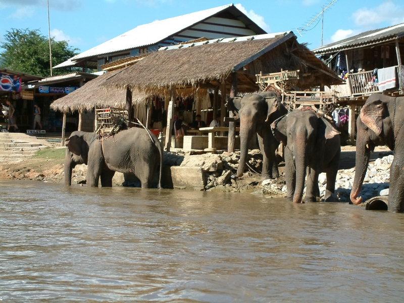 Elephants Near Chiang Rai