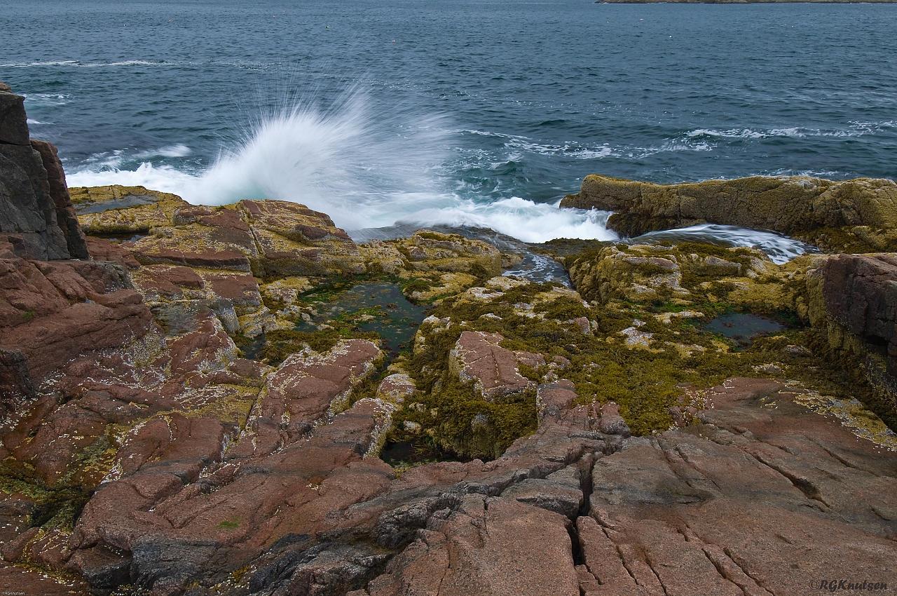 Acadia NP - Tide pools