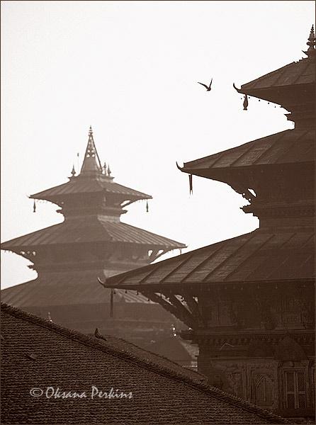 Pigeons 3, Durbar Square, Kathmandu