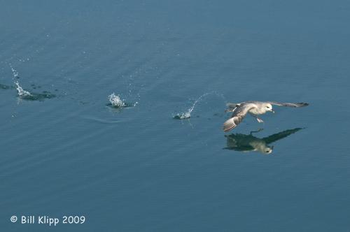 Fumar Takeoff, Svalbard 1