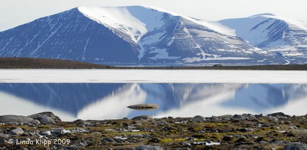 Reindeer Flats, Svalbard Norway  2