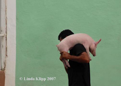 Bringing Home the Bacon  --  Trayendo a Casa el Bacon
