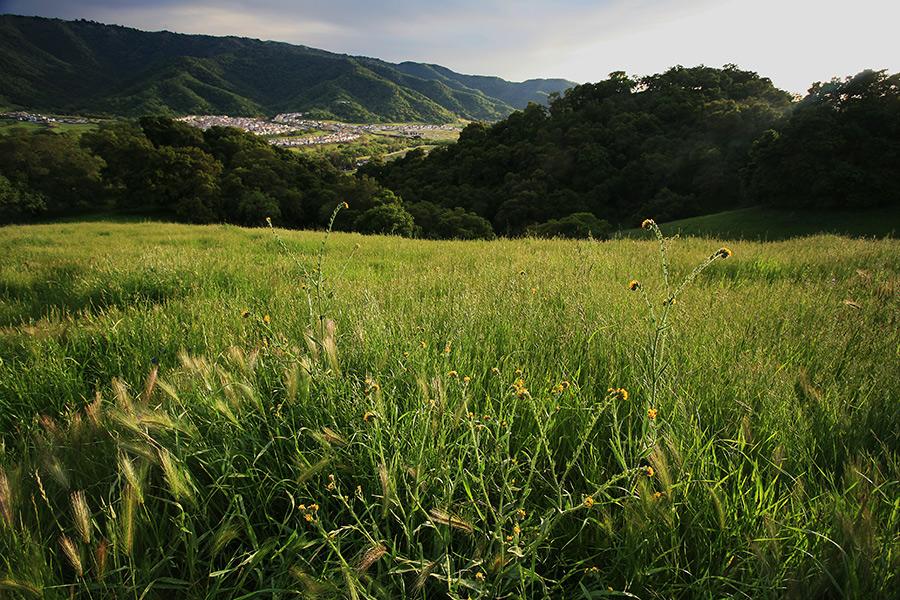 Spring Mountain Meadow