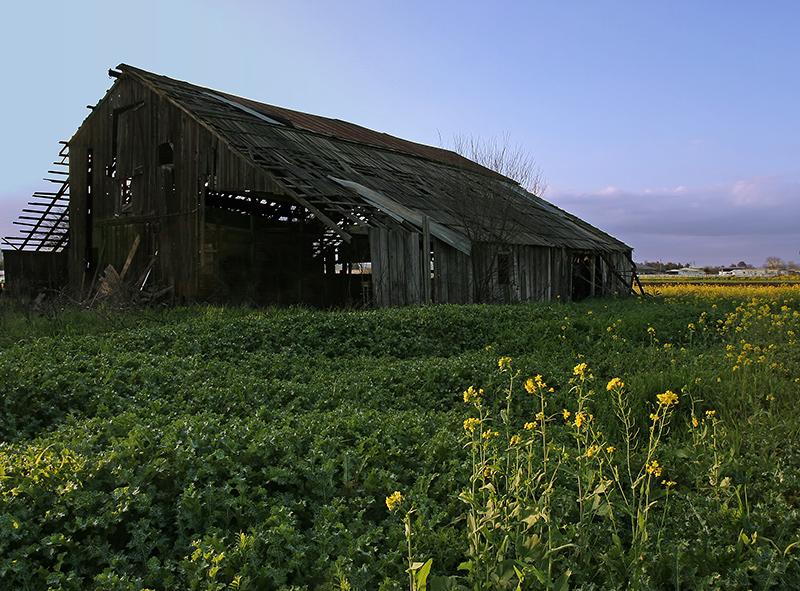 Farm in Decline-2