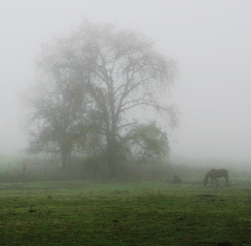 One Horse in Fog.jpg