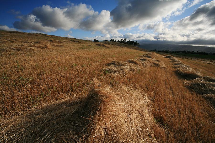 Hay-Field-WS.jpg