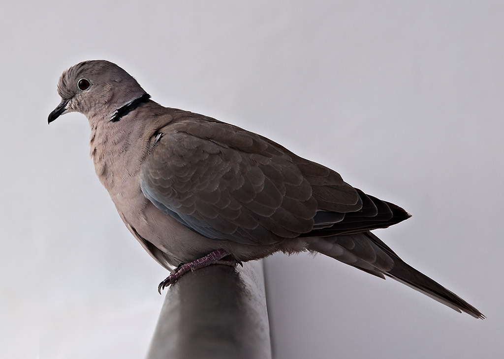 Tenerife: Birds 2