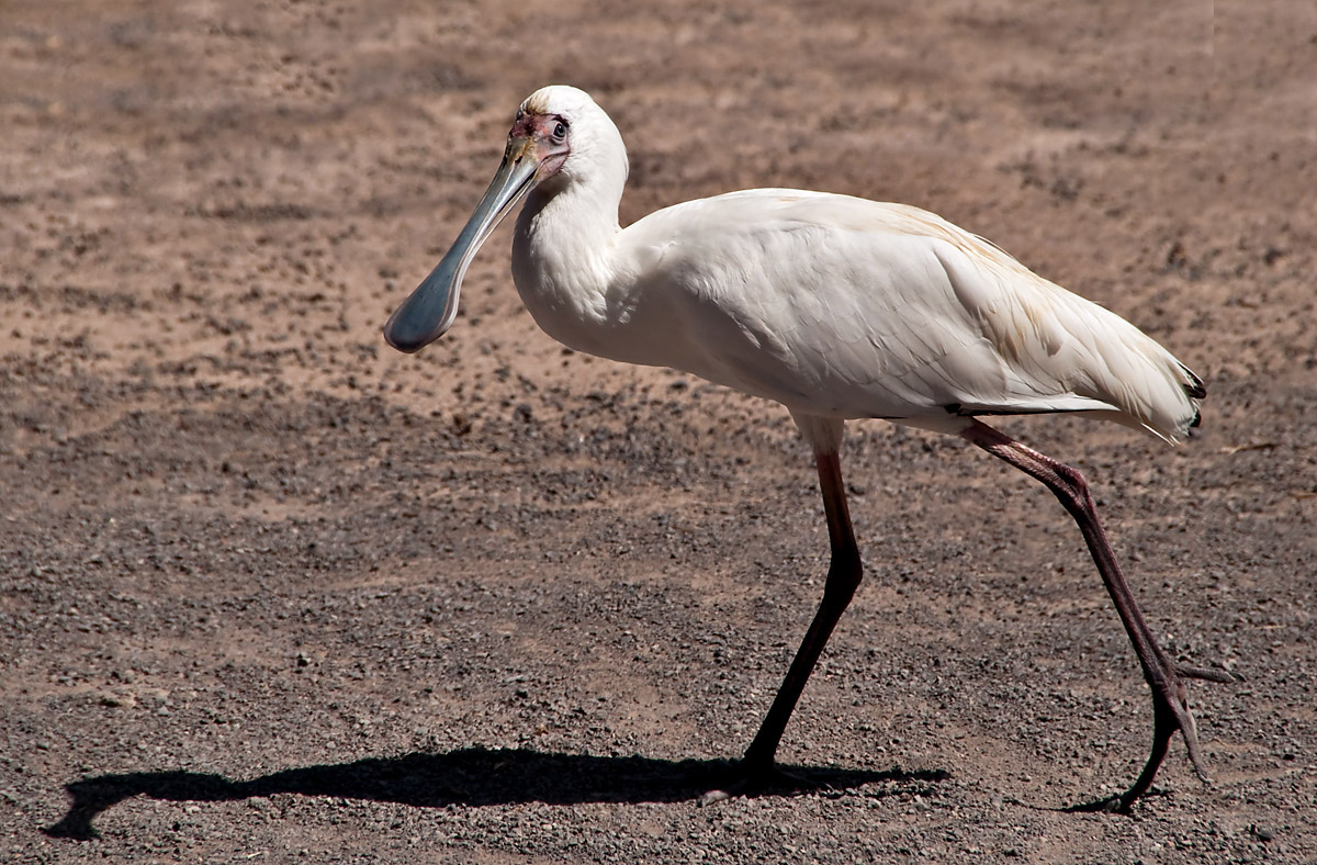 Tenerife: Birds 3