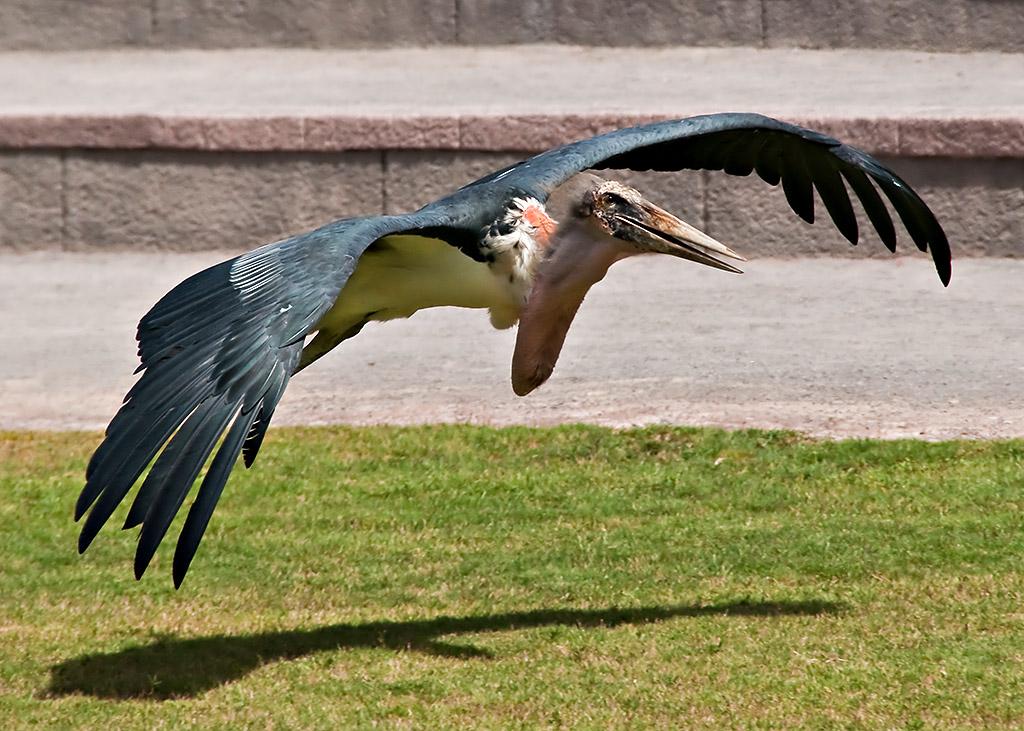 Tenerife: Birds 1