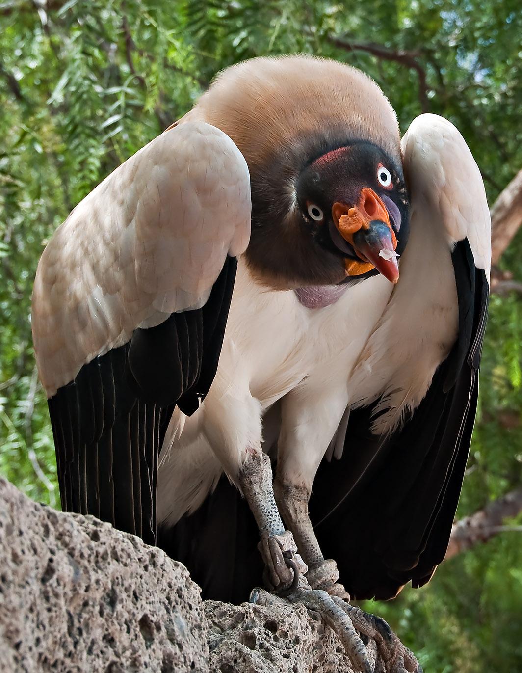 Tenerife: Birds 4