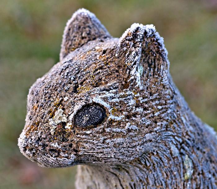 Frosty_Squirrel_16140_D5000.jpg