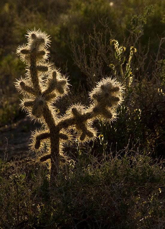 <B>Plant Blaze</B> <BR><FONT SIZE=2>Lone Pine, California - April 2008</FONT>