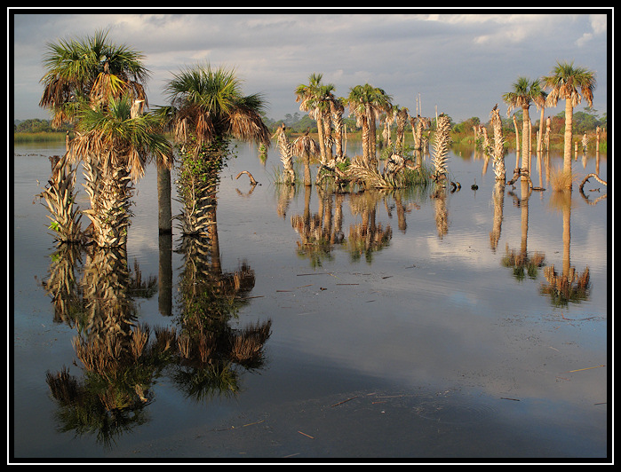 Viera Wetlands Birdscape